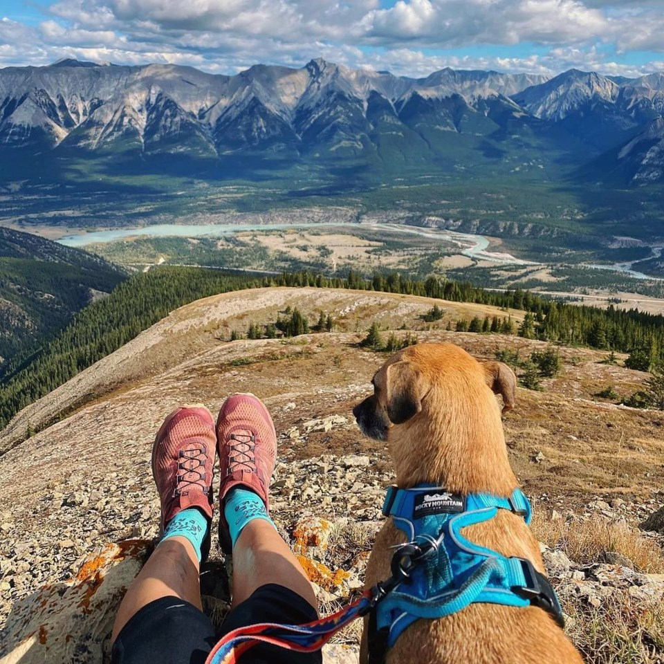 Rocky Mountain Dog Photo
