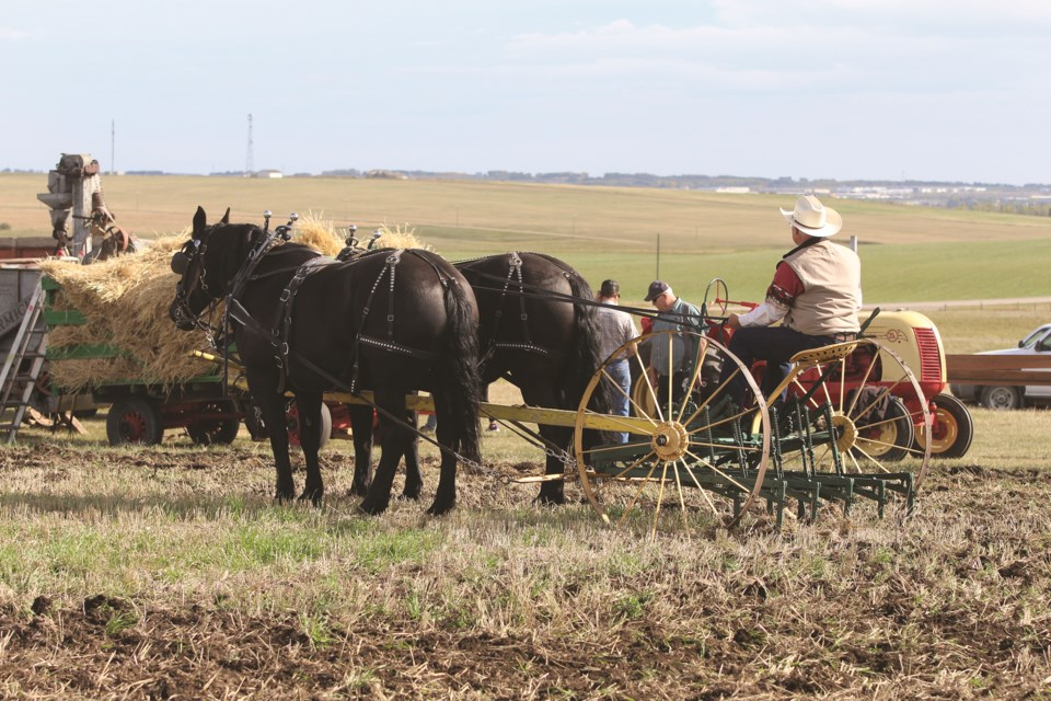 A man demonstrates an old-fashioned horse-drawn plow at Airdrie Agricultural Society's Art of the Harvest on Sept. 18.