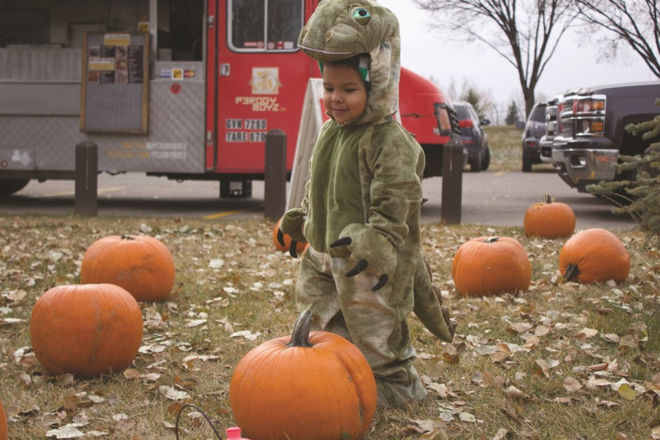 Lucas, 3, scours the pumpkin patch dressed as a dinosaur during Boo at the Creek Oct. 27 at Nose Creek Park. Photo by Ben Sherick/Rocky View Publishing