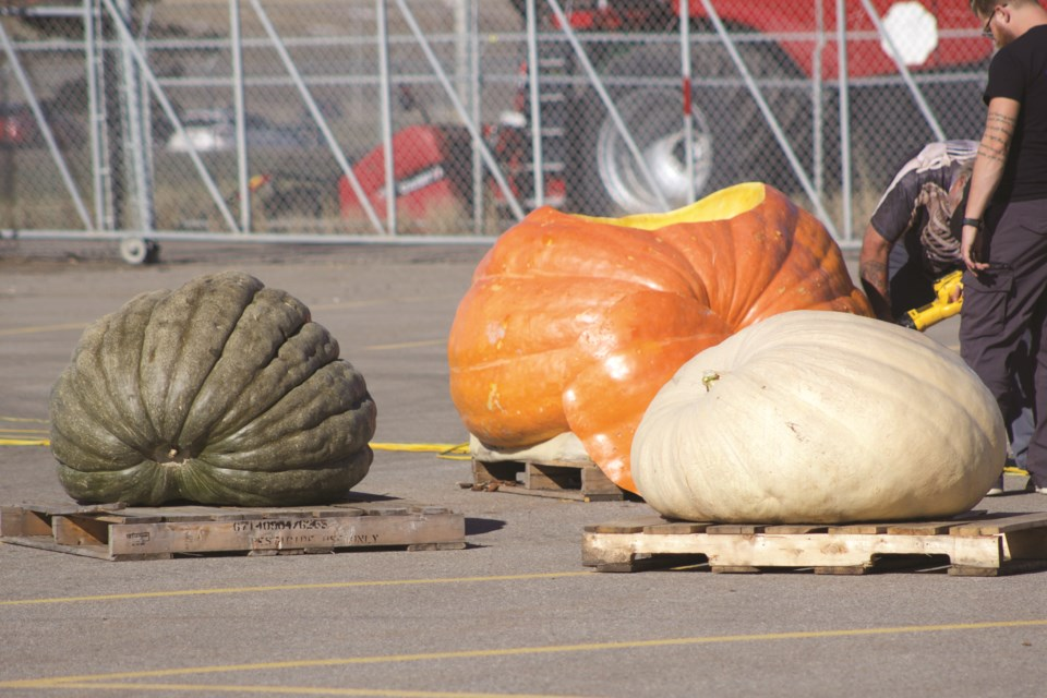 The 16th annual Pumpkin Festival Oct. 12 at Blue Grass Ltd. Nursery, Sod and Garden Centre culminated with three giant pumpkin drops. The largest pumpkin weighed approximately 1,200 pounds, and was filled with another 250 pounds of pumpkin pieces. Photo by Ben Sherick/Rocky View Publishing