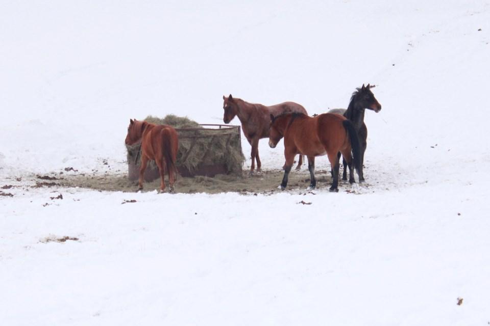 EquestrianCentre