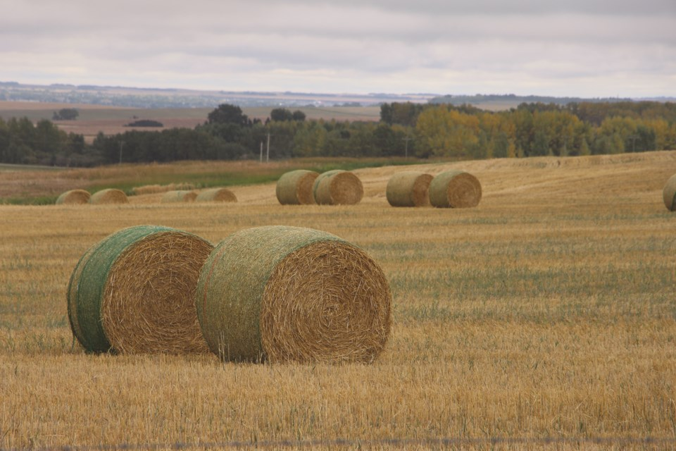 FRONT-AFieldOfHay