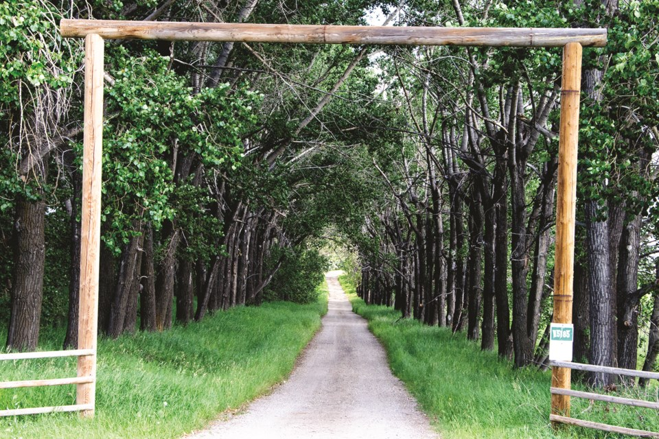 The entrance to a farm just west of Airdrie has plenty of overhanging trees. Photo by Jordan Stricker/Airdrie City View.