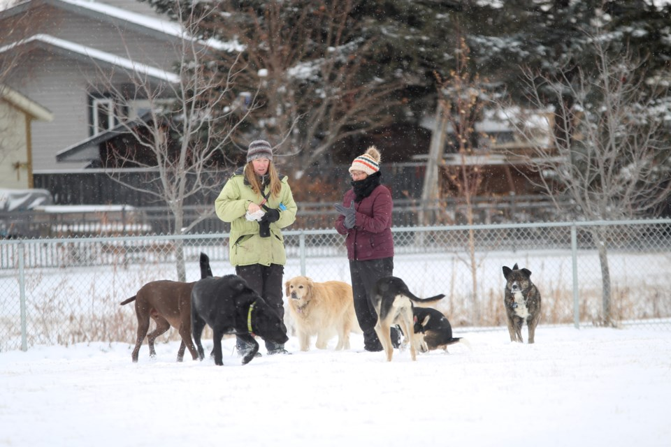 Dog walkers at the off-leash area near Nose Creek Park bundled up on a chilly Nov. 5 afternoon, though their pups didn't seem to mind the cold. Photo by Scott Strasser/Rocky View Publishing