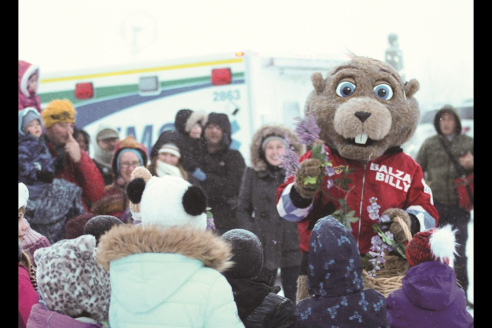 Balzac Billy will return to Blue Grass Ltd. Nursery, Sod & Garden Centre for Groundhog Day Feb. 2. Folklore indicates, if the marmot sees his shadow, it will result in six more weeks of winter. File Photo/Airdrie Today