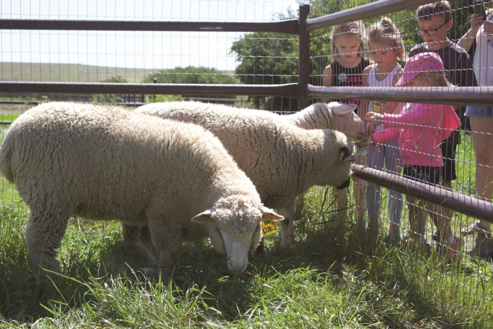 Alberta Open Farm Days is returning Aug. 15 and 16, albeit with new public health orders in place to help prevent the spread of COVID-19. This year, 80 farms are taking part across the province. File photo/Rocky View Weekly.