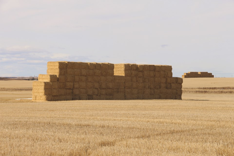 A wall of hay bails is a prominent feature of a farmer's field off Highway 566 just east of Balzac and west of Kathryn.