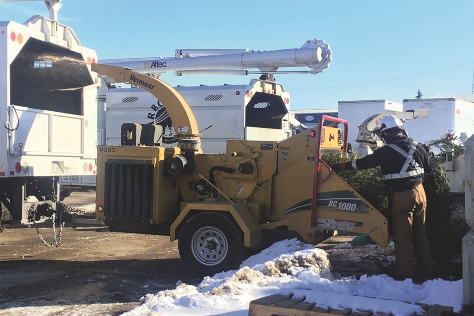 The Recycling Depot played host to the City of Airdrie's annual Christmas tree chipping event on Feb. 20, where dozens of leftover trees were converted into mulch.