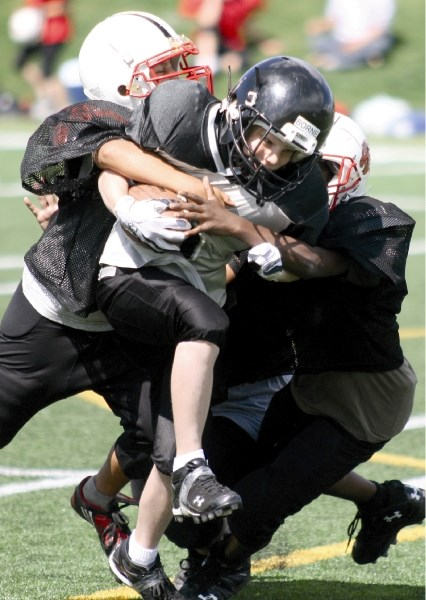 The Airdrie PeeWee Storm's running back tries to elude two Calgary Bronco tacklers during pre-season football jamboree action at Calgary's Shouldice Park on Aug.