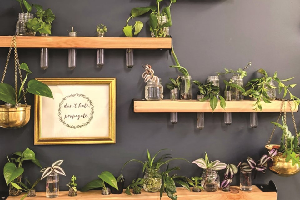 Airdrie plant shop, Sweet Joan.co, is offering free plant cuttings as part of their take-a-pant, leave-a-plant concept wall.