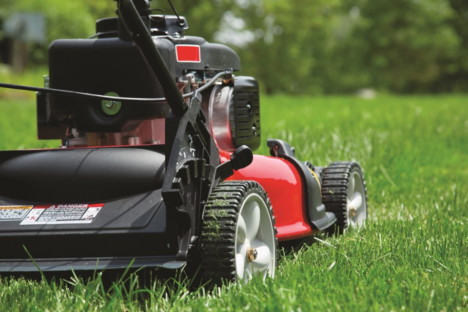 The Nature Conservancy of Canada is encouraging residents to refrain from mowing their lawns during the month of May to protect pollinating species this spring. Photo: Metro Creative Connection