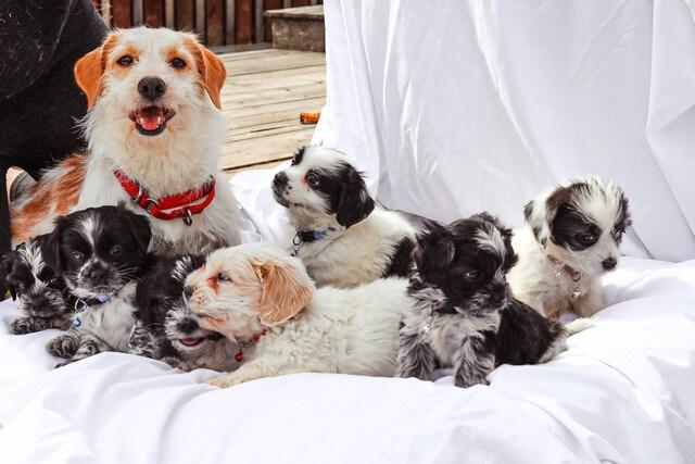 news-dog-cookie-crumbs-1536x1024_p3528206