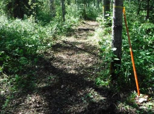 Beatton trails 6