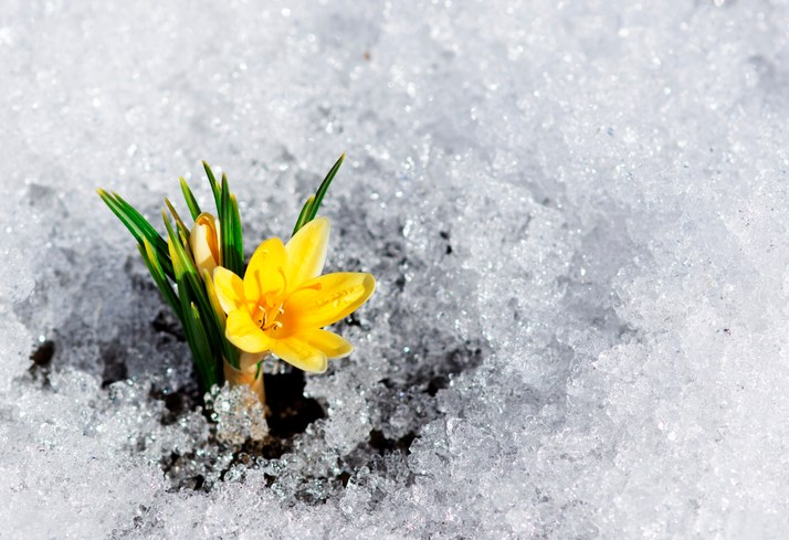 Spring-GettyImages