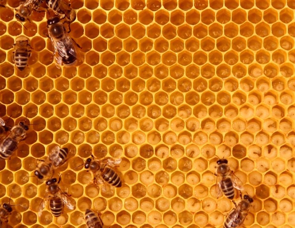 HoneycombHC1703_source (1)