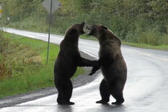 21142212_bear-fight-minthumb