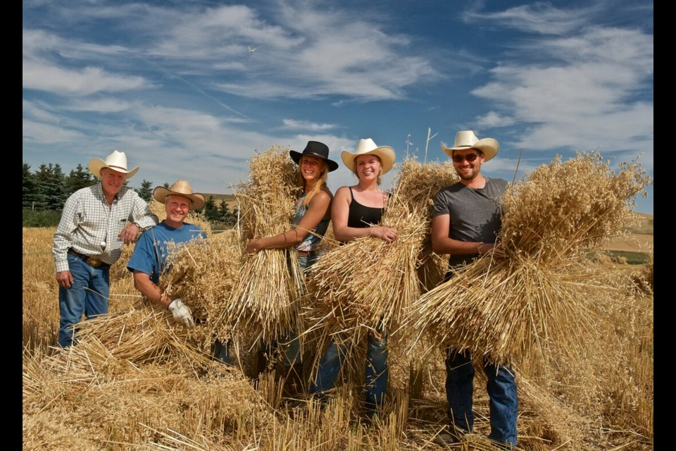 Friends and neighbors help with the harvest on Leo Gooch's farm located south of Arrowwood, Alberta. Bundling the freshly cut oat sheaves into stooks are Ken Whittle, Robert Kraus, Katie Arbour, Allison Kraus and Zack Cormier. Photo: Tim Johnston