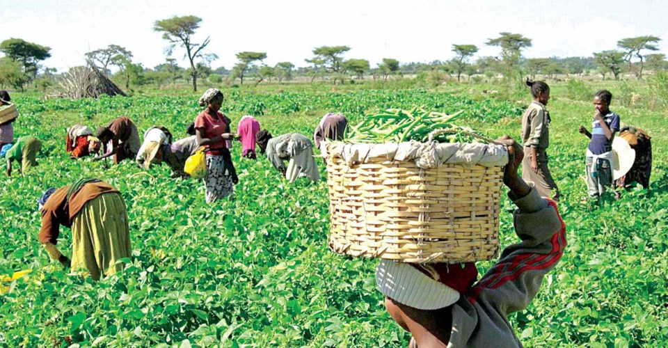 Lagos govt completes five-year masterplan for agricultural sector