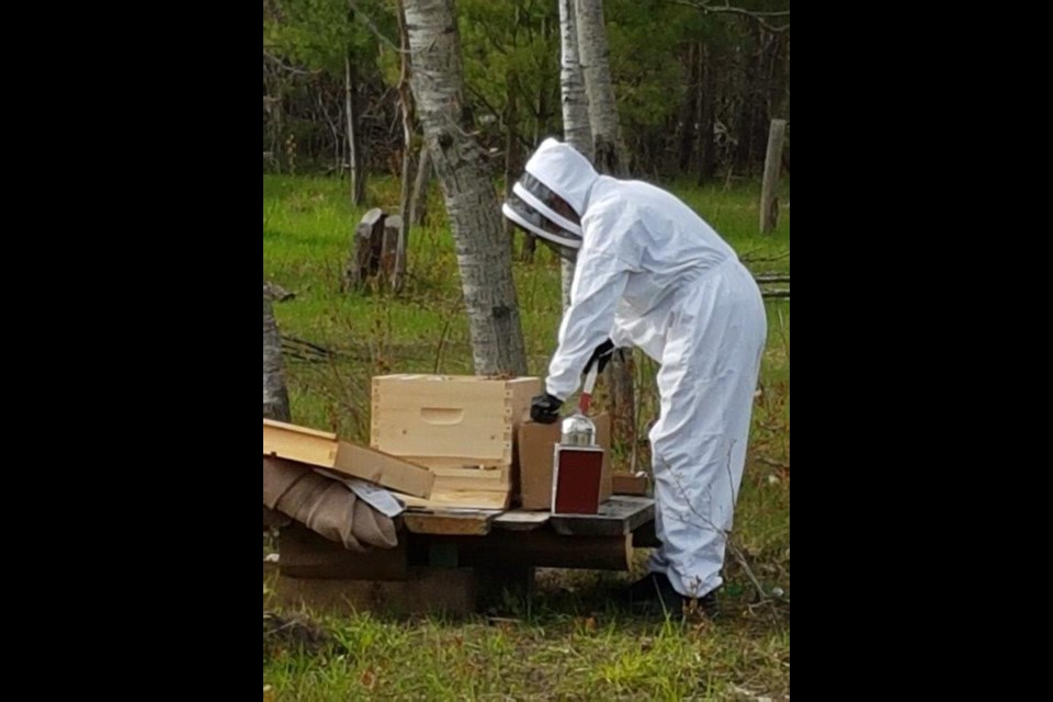 Ruth Gowan smokes her bees to calm them then checks the hive for honey./Contributed photo
