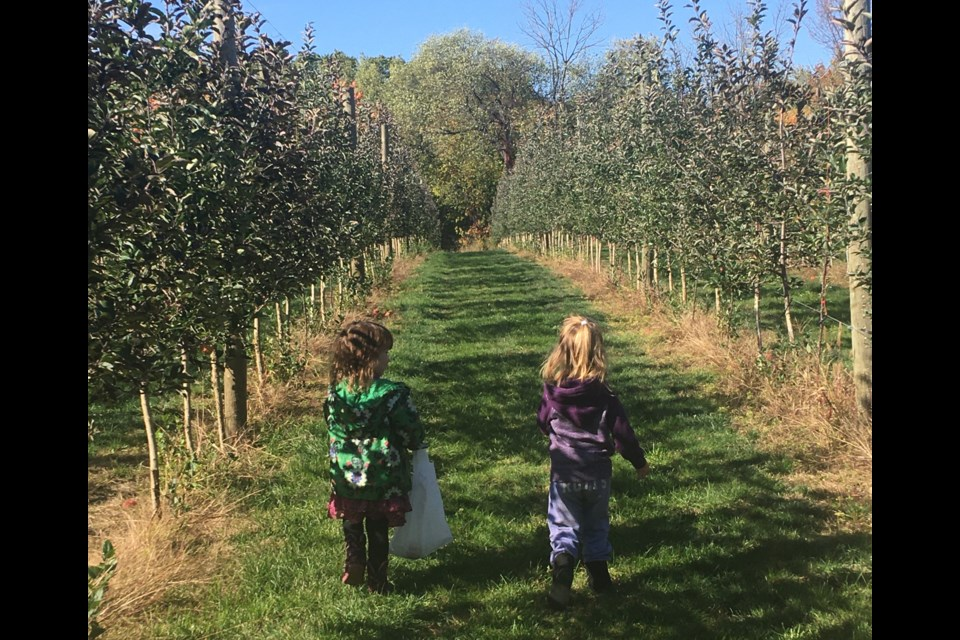 Apple picking at Barrie Hill Farms has become an annual tradition for many local families.