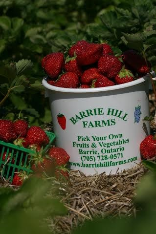 The prolonged warmth, helped by irrigation, is resulting in sweet strawberries at Barrie Hill Farms.