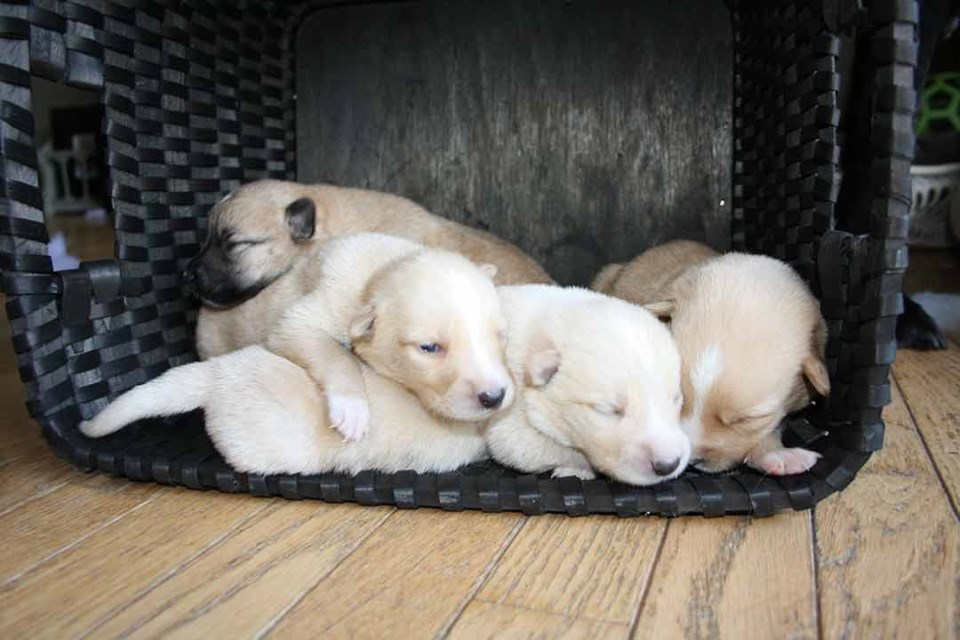 Puppies(1)