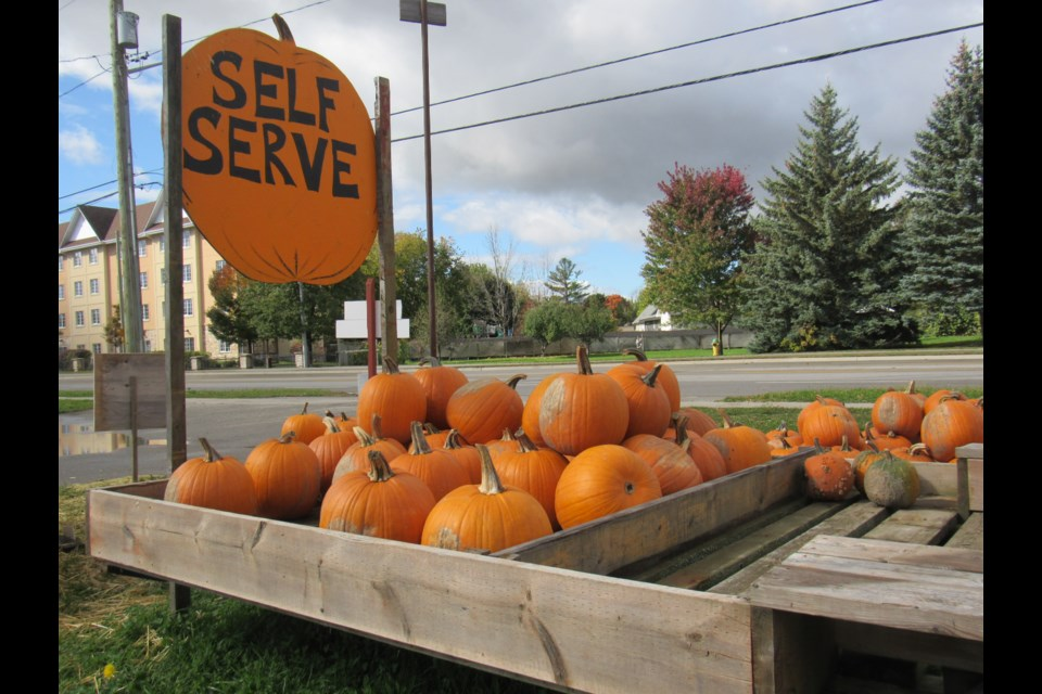 The Konrad Farm Markets pumpkin stand on Essa Road in Barrie's south end is full of orange and ready for picking. Shawn Gibson/BarrieToday