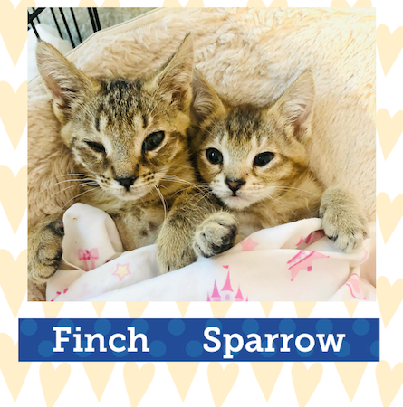 Finch and Sparrow Adoption Pic