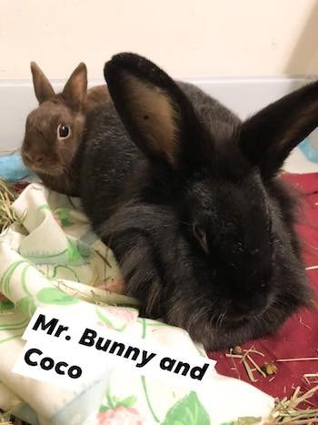 Mr. Bunny and Coco