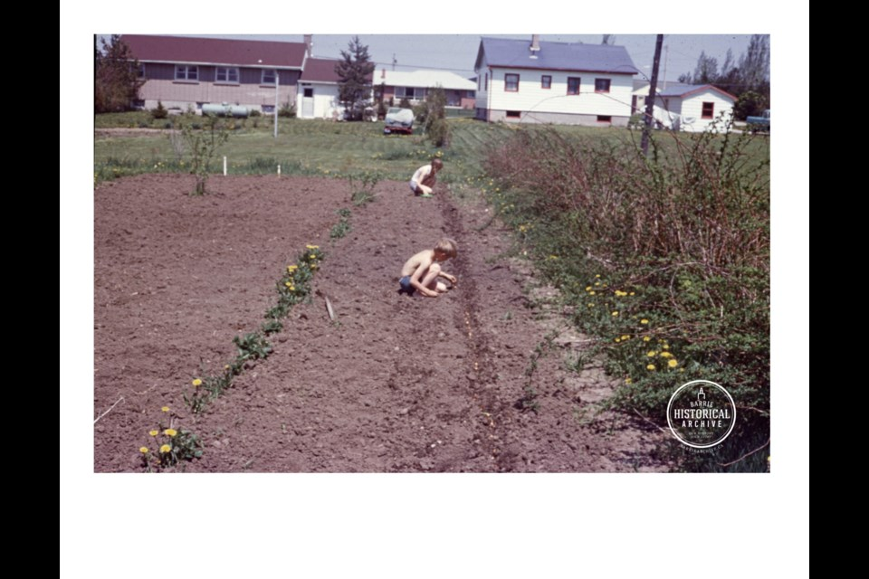 Children plant a vegetable garden at 206 Bertha Ave., in 1960. Photo courtesy of the Barrie Historical Archive
