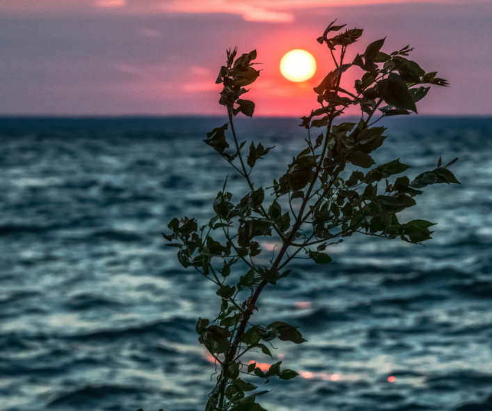 Two Lake Simcoe area environmental groups released a report called Lake Simcoe Under Pressure in 2021: Key Stressors and Solutions, outlining their concerns a few key projects could have on Lake Simcoe.