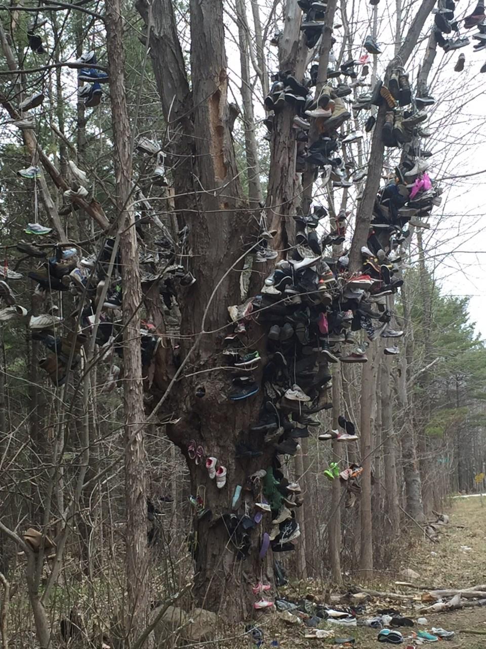 shoe tree vertical best