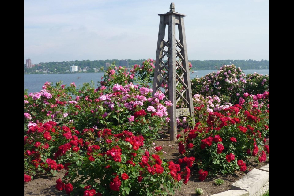 In 2000, the City of Barrie provided space for a garden that would hold the Millennium Memorial Rose Garden, consisting entirely of Canadian-developed roses. The Huronia Rose Society planted and continues to maintain this rose garden today at the Southshore Centre.