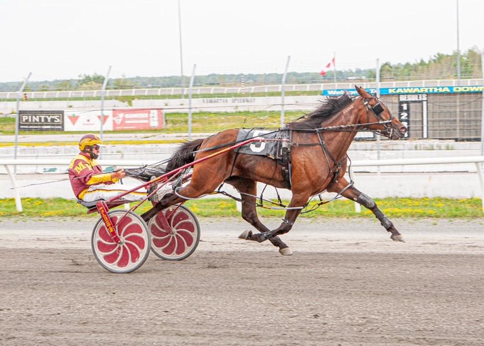 Money Honey_racehorsephoto_26062021