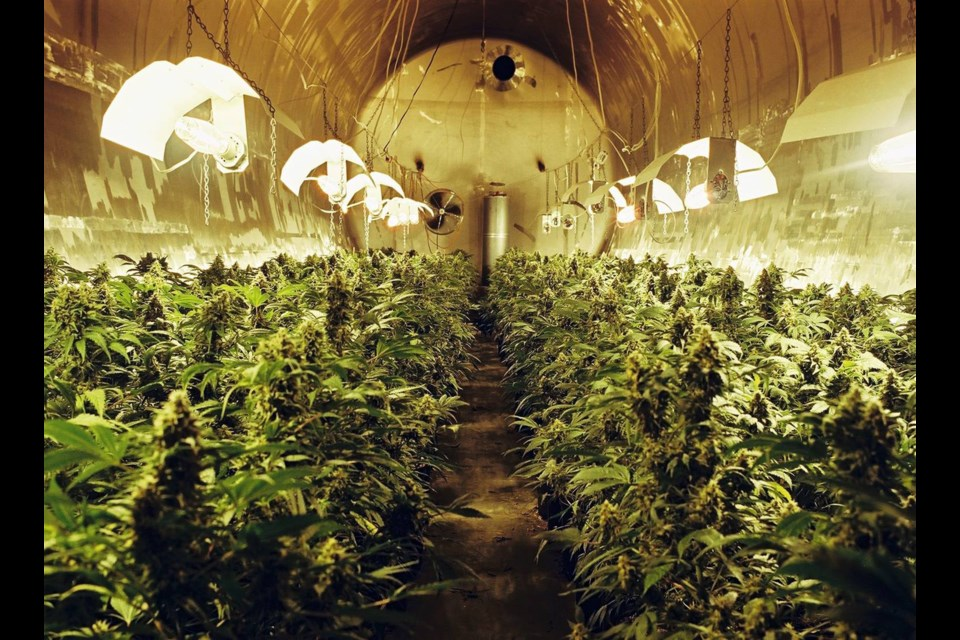 When police raided the former Molson brewery in 2004, they found what they described as the largest indoor marijuana grow facility in Canadian history. File photo