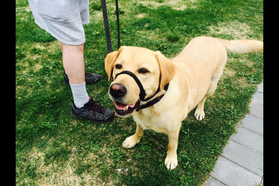 As a trained seeing-eye dog, Albert opens up world of opportunity for his owner.