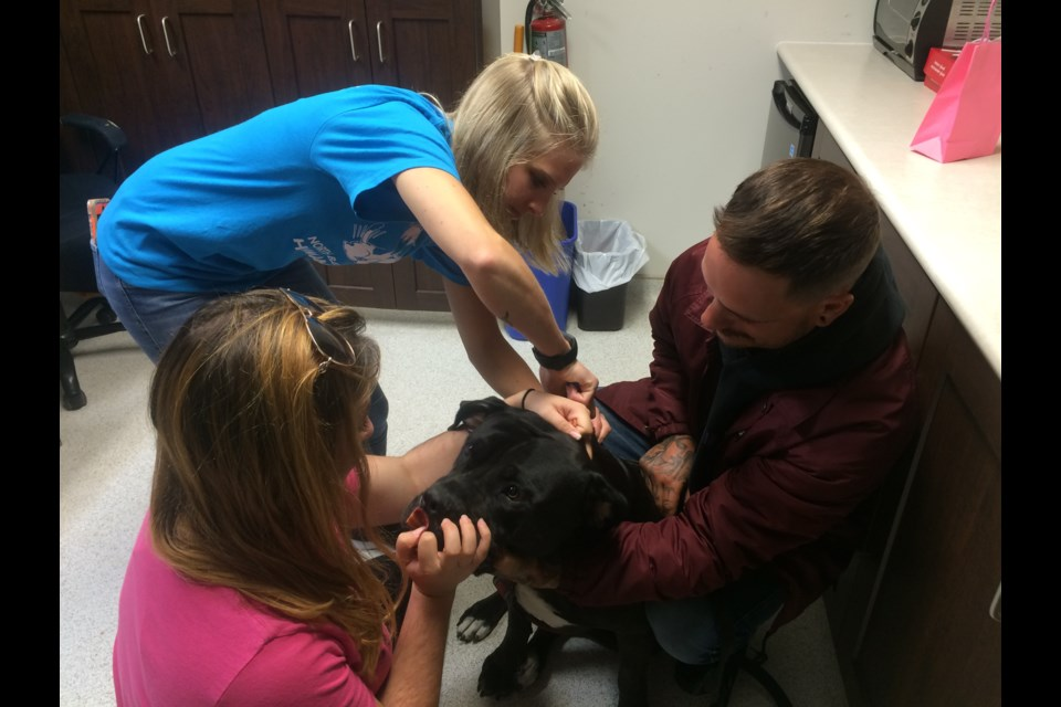 Rosa is getting microchipped as part of Barkfest hosted by the North Bay & District Humane Society