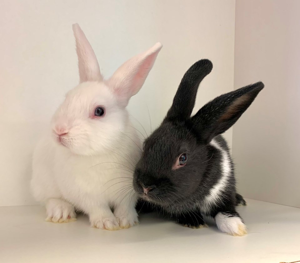 20210909 Rabbits