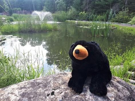 20210803 pete-the-bear burk's falls