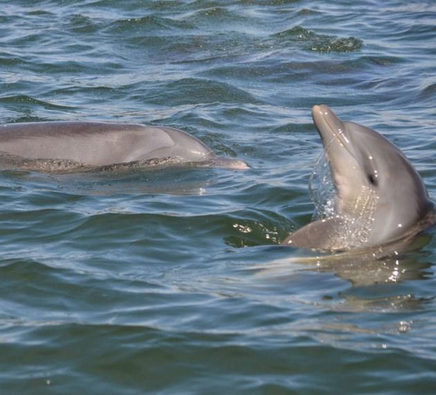 20171218 dolphin walton_edited-1