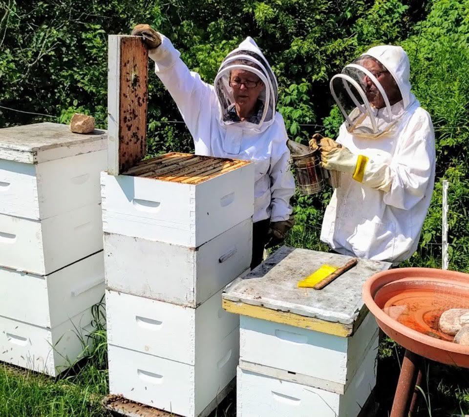 honeyfest powassan