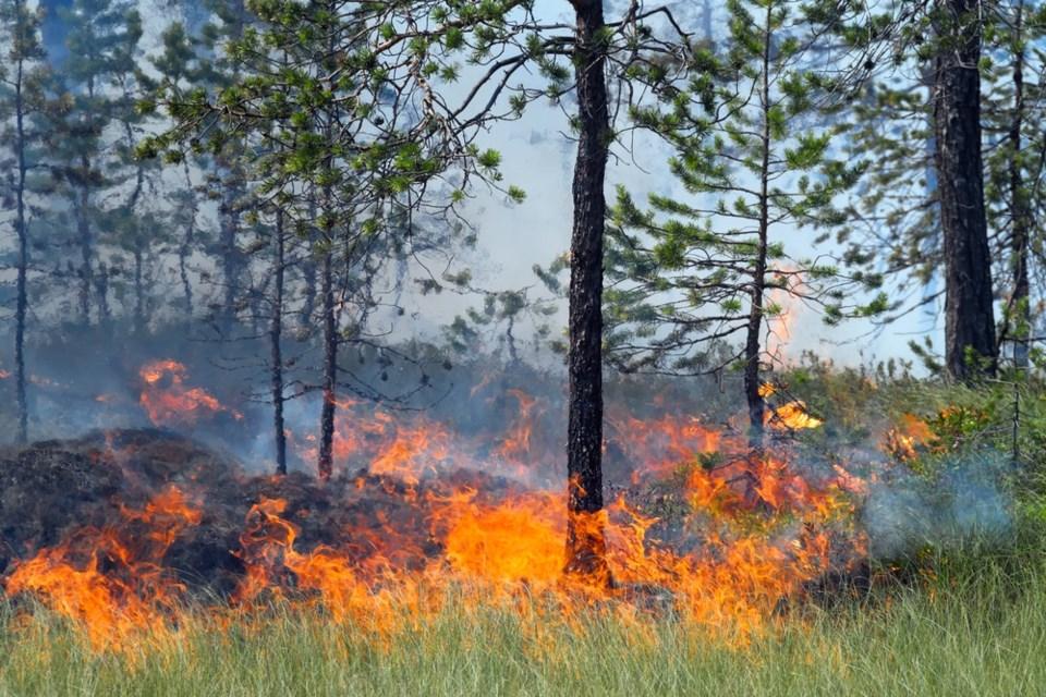 forest fire stock shutterstock_106906292 2016