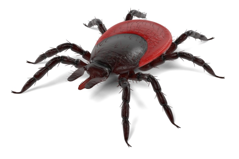 20180605 blacklegged tick AdobeStock_130216632
