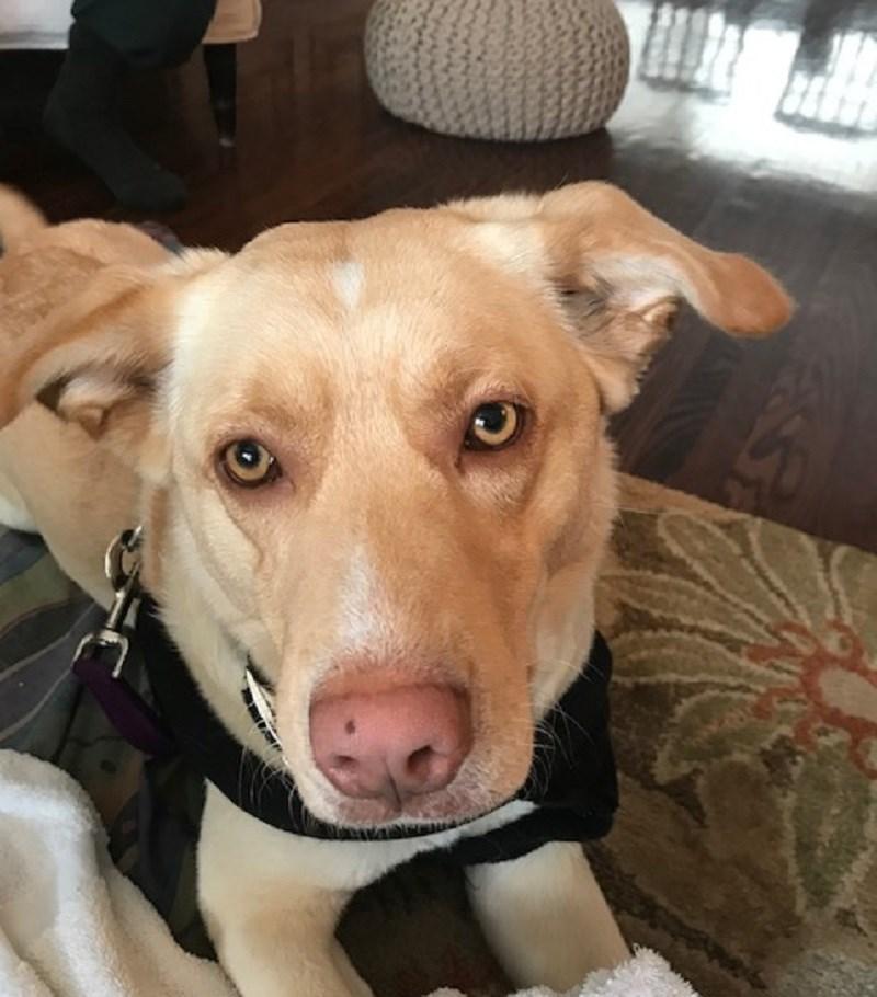 20210407 dave potvin's dog beauty