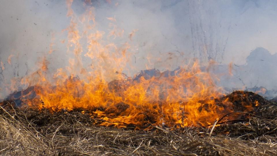 Brush fire crop (AdobeStock)