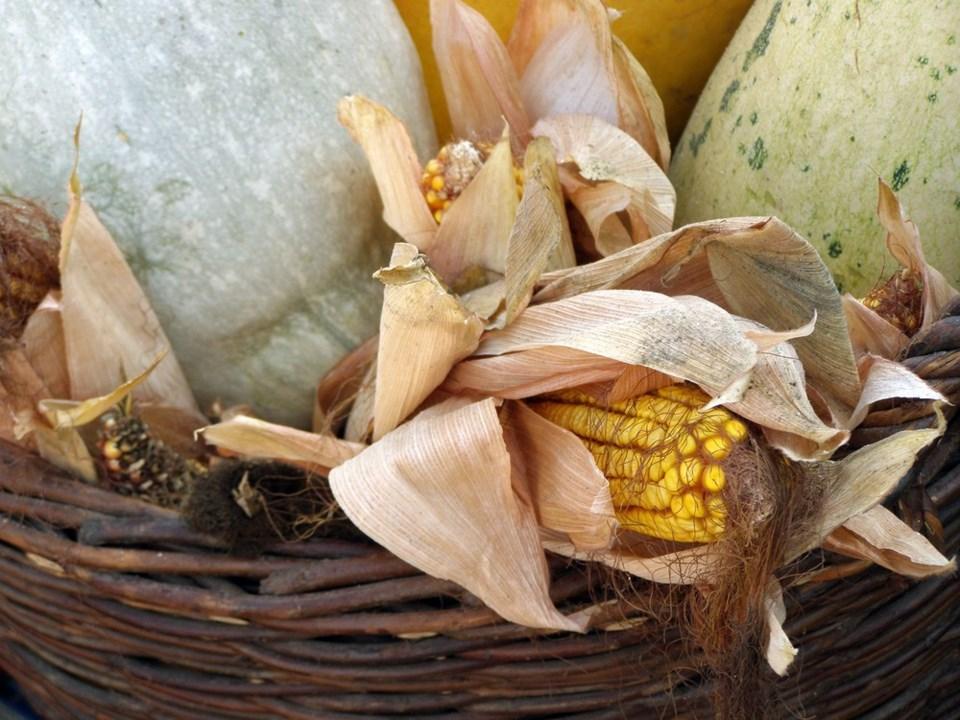 fall fair corn shutterstock_37680970 2016