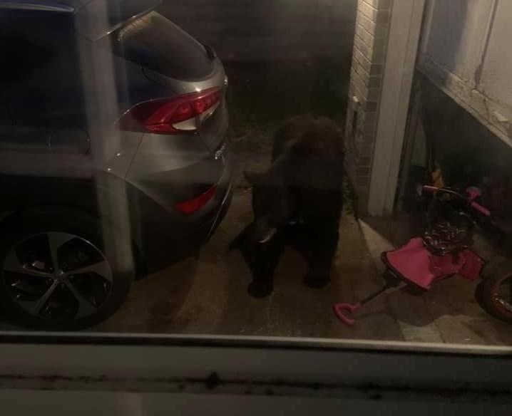 20200707 bear in window