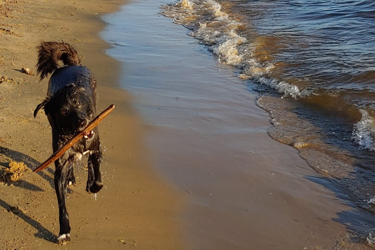 How one can make seaside days, highway journeys to the cottage and different summer season outings pet-friendly