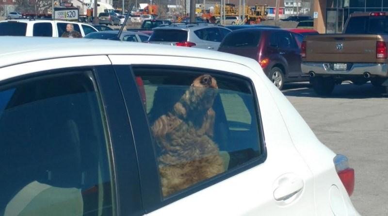 dog in hot car rv 2016