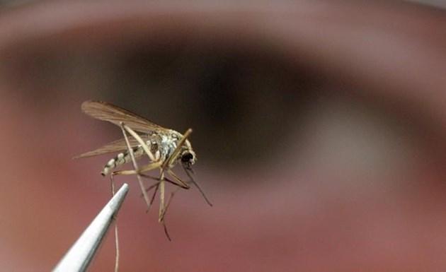 mosquito 2017